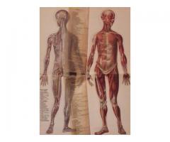 Carte de colectie. Tratat de medicina editat in 1929.