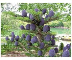 Plante ornamentale Oradea -Master Garden Oradea