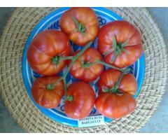 Vand seminte de tomate 150 soiuri pure de origine romanesti si straine