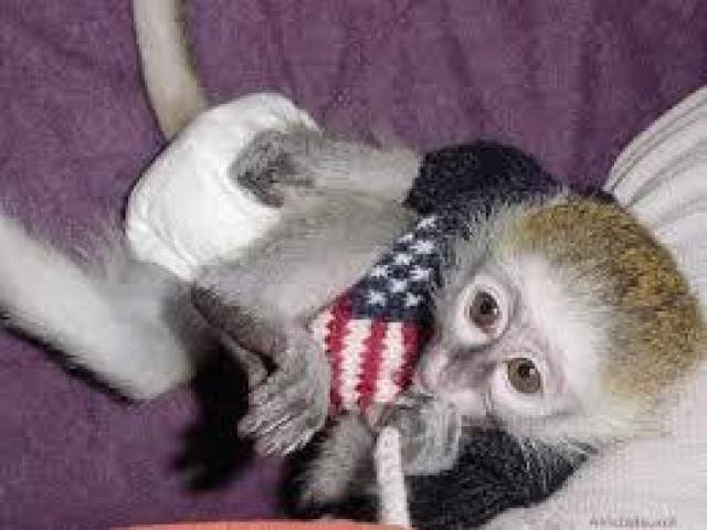 minunata Capuchin